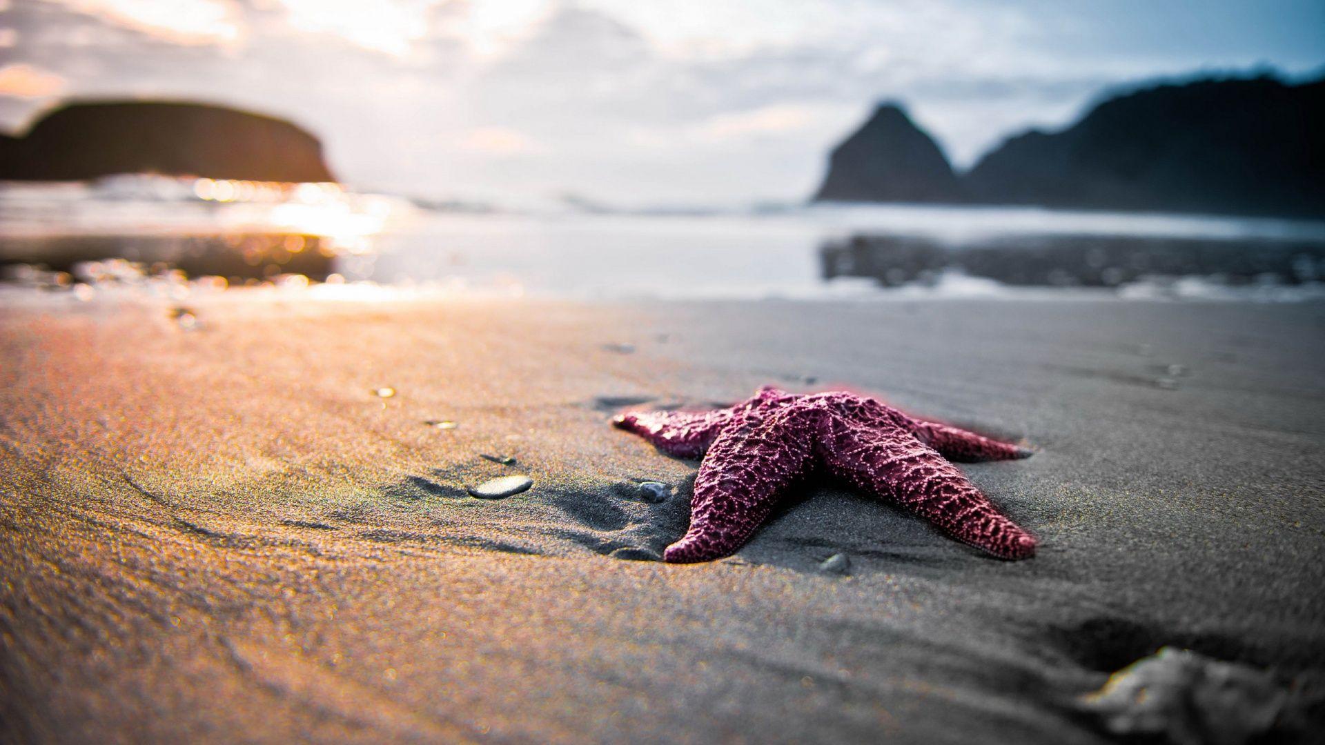 caribs bahamas-pink-starfish Bahamas-1920 × 1080
