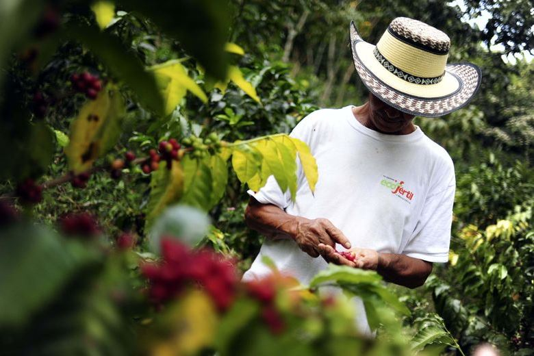 Honduras Honduran Coffee Route 780 × 520